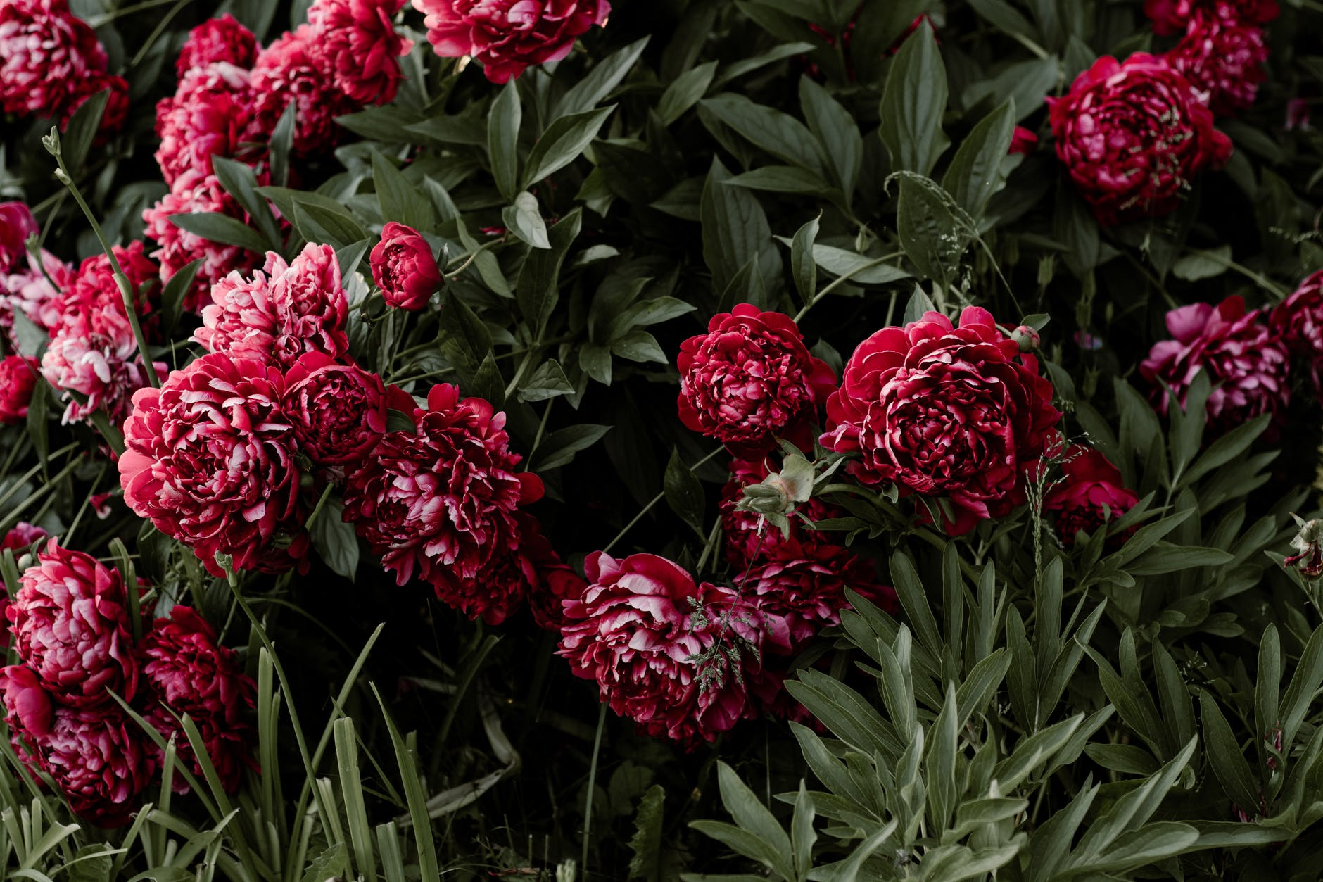 Most Stunning Flowers That You Can Gift Your Girlfriend on Her Birthday